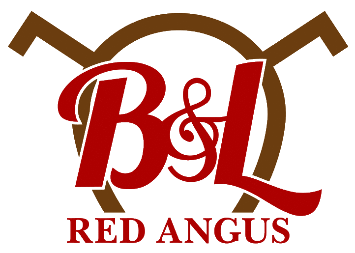B&L Red Angus